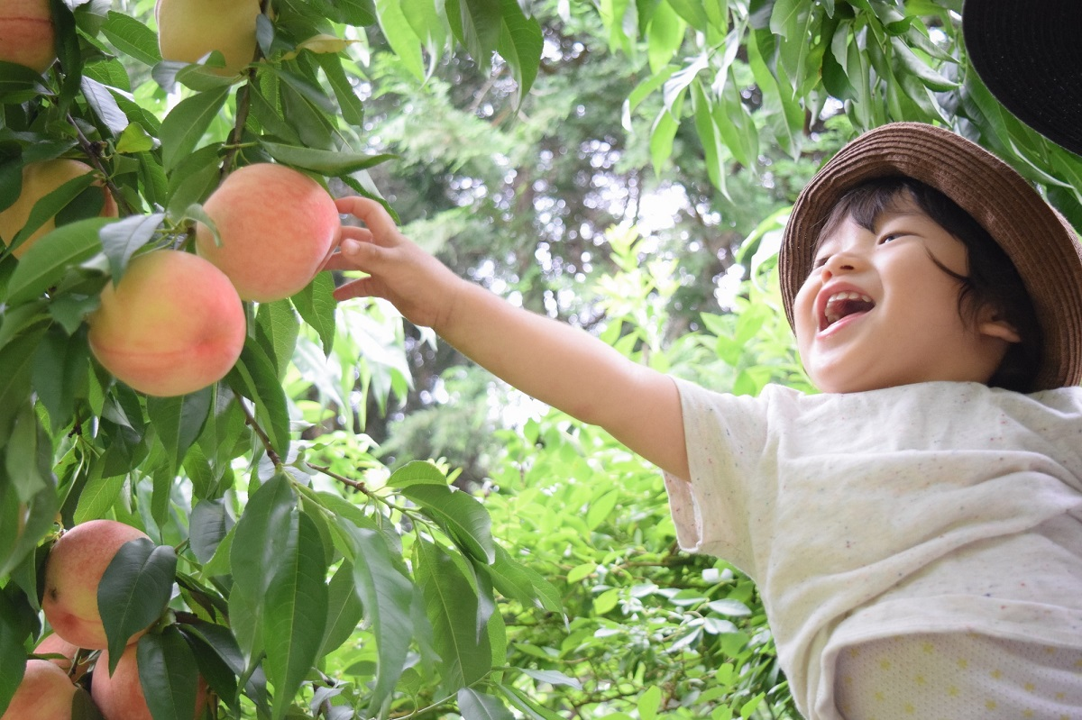 Seasonal fruit calendar of Japan! Find the best fruit tour during your trip to Japan!