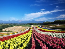 Well-known sightseeing spots in Furano